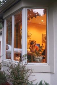 Home Windows Belvidere IL